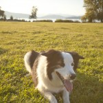 dog friendly engagement session at spanish banks by vancouver wedding photographers www.lovetreephotography.ca