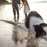 dog engagement session at spanish banks by vancouver wedding photographers www.lovetreephotography.ca