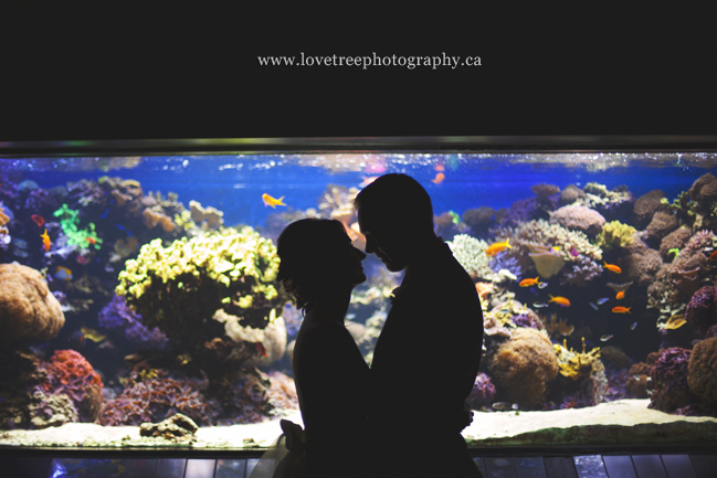 A wedding at the Vancouver Aquarium by www.lovetreephotography.ca