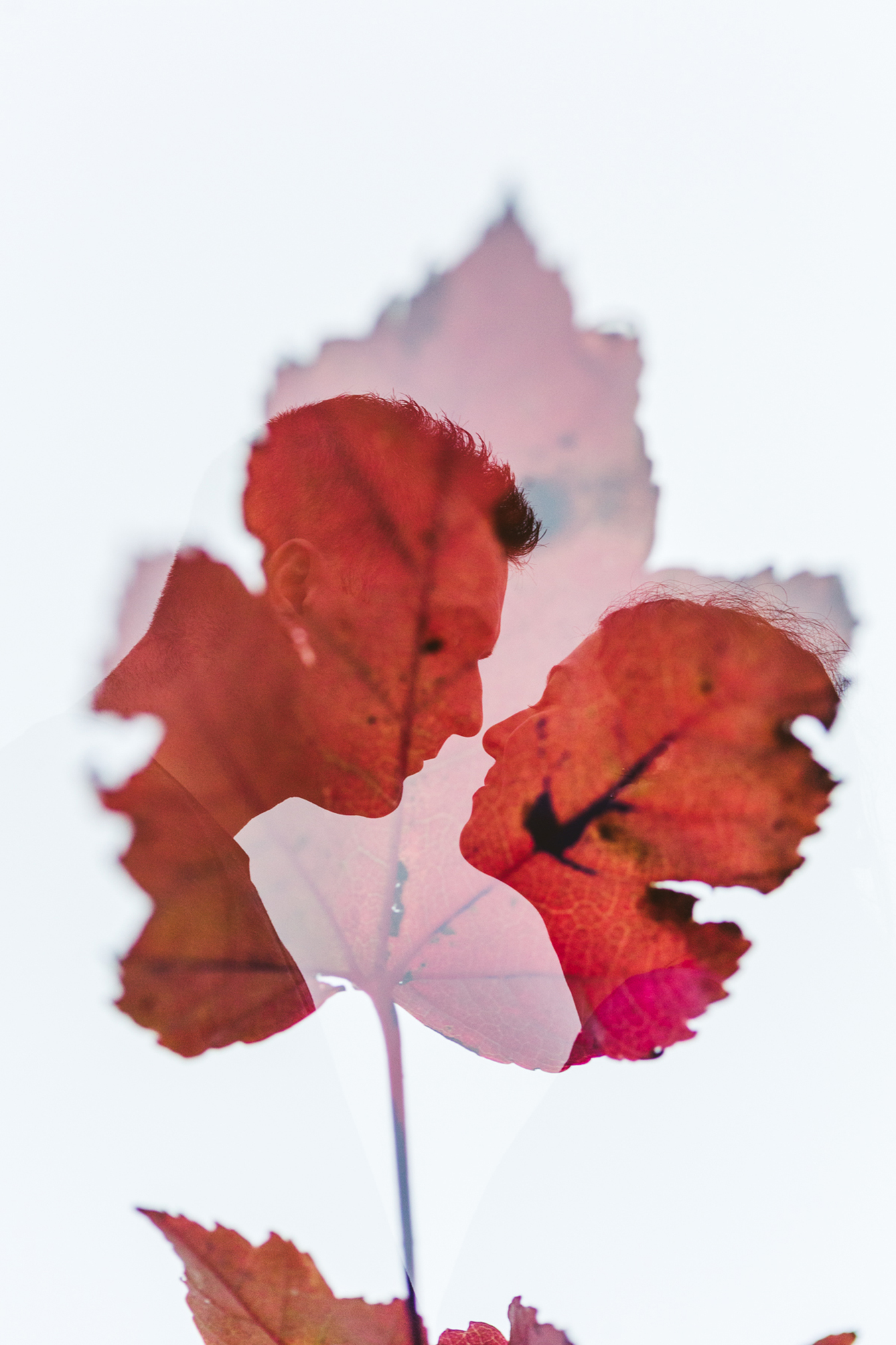 double exposure with a maple leaf