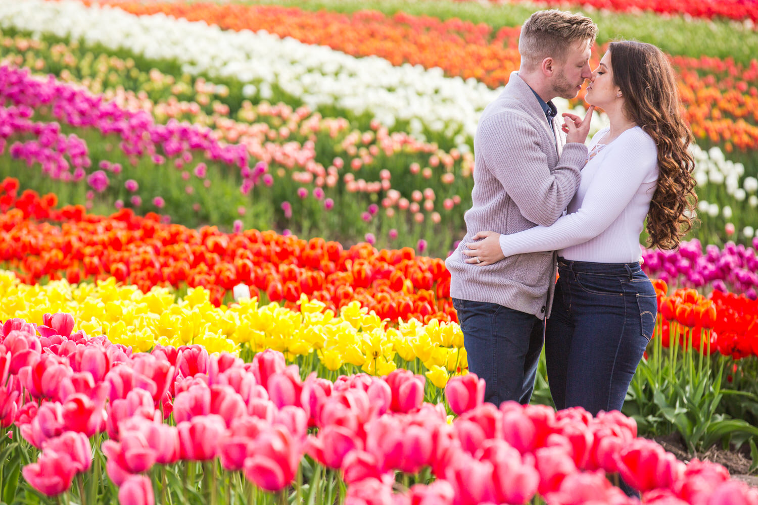 tulips of the valley Abbotsford Tulip Festival